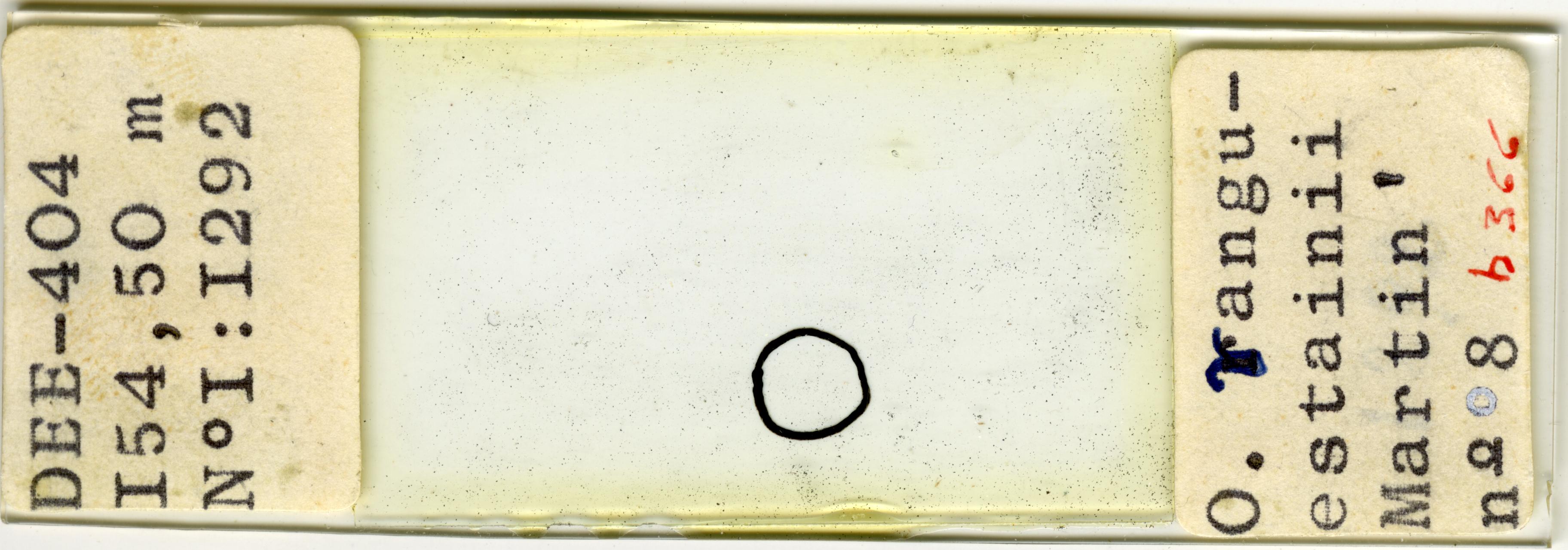 Lame n°DEE-404 I54, 50 m N° I : I292 - O. vanguestaini Martin ' n° 8 b 366