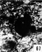 Fig. 67 - Peteinosphaeridium sp. Lame mince polie parallèle au plan de stratification -180,00 m. b 326.