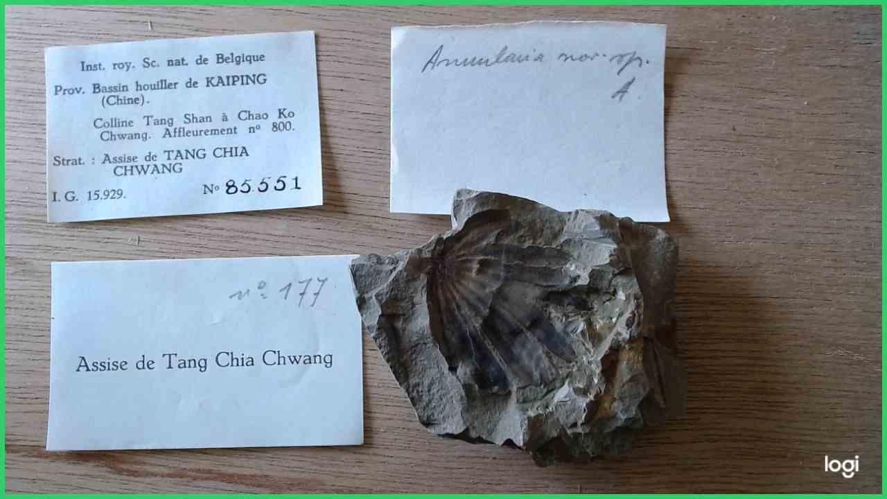 IRSNB b 8631 - Specimen & labels