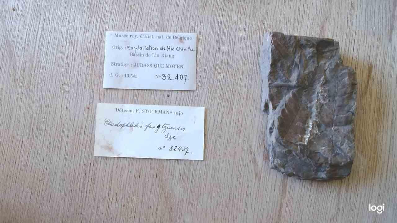 IRSNB b 8688 - Specimen & labels