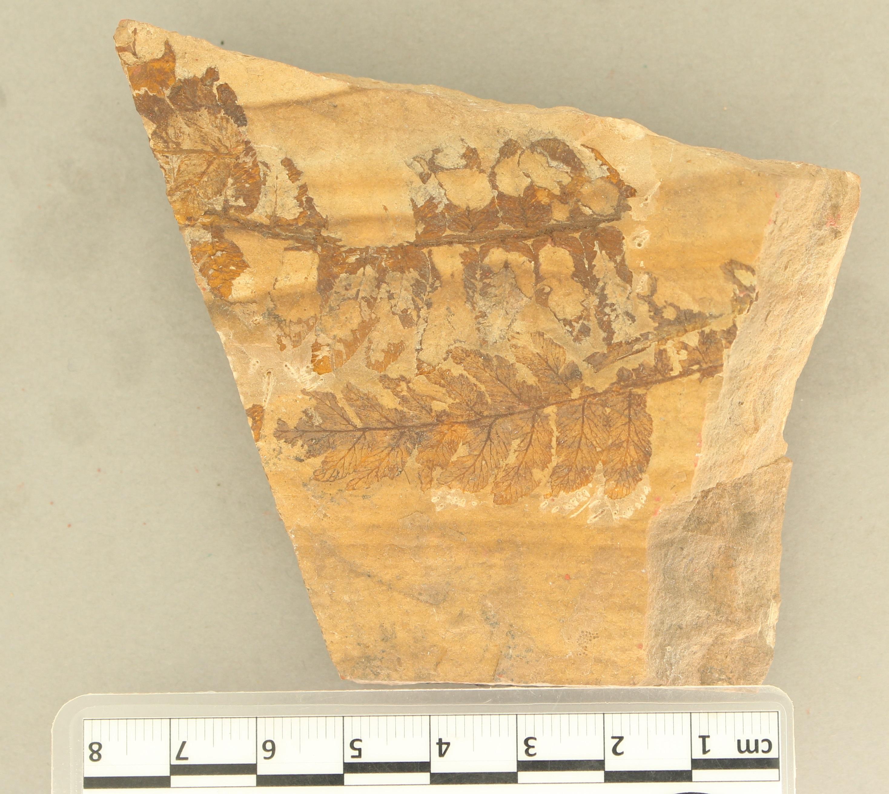 IRSNB b 8685 - Detail