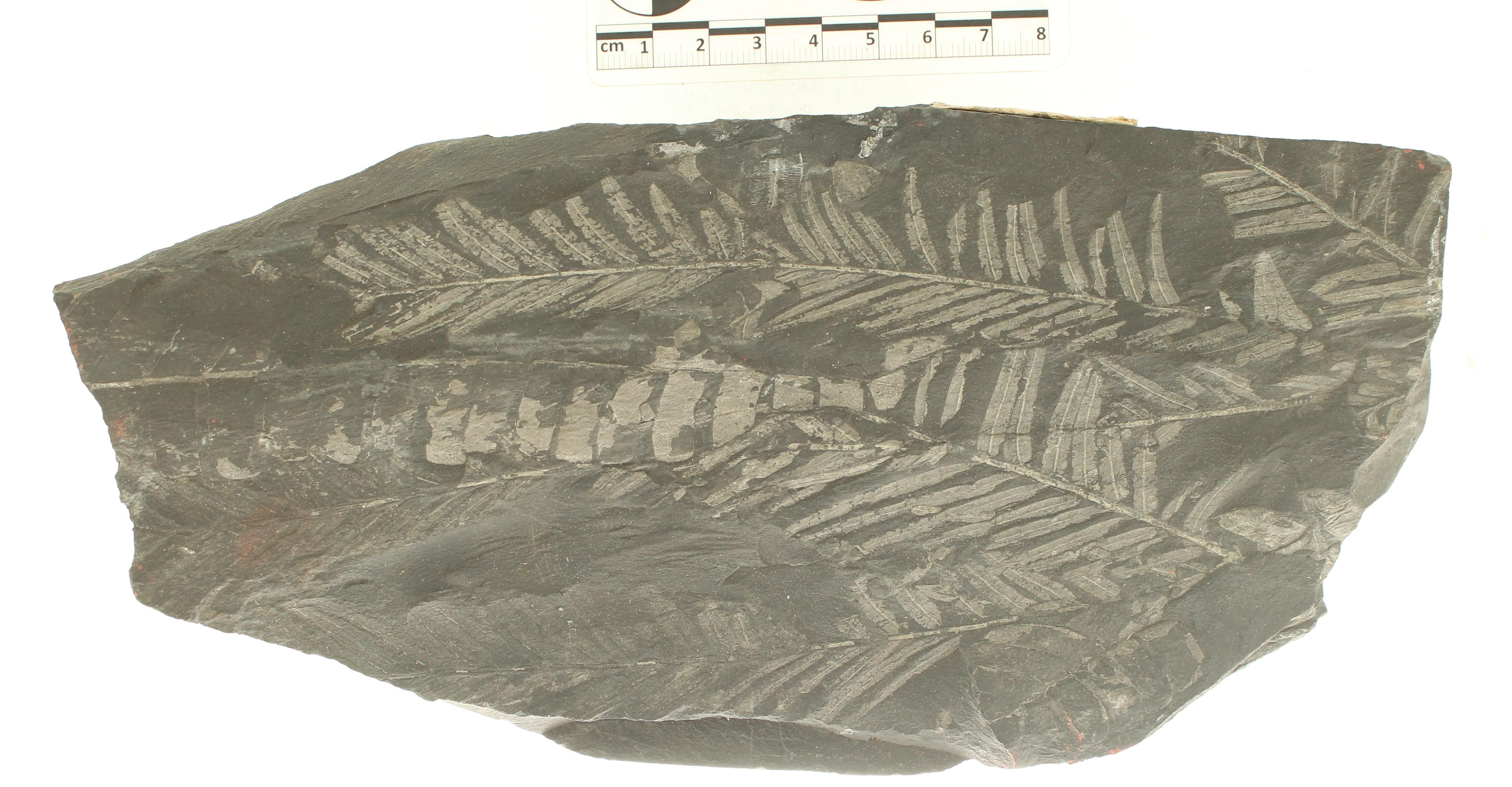 IRSNB b 8721 - Detail