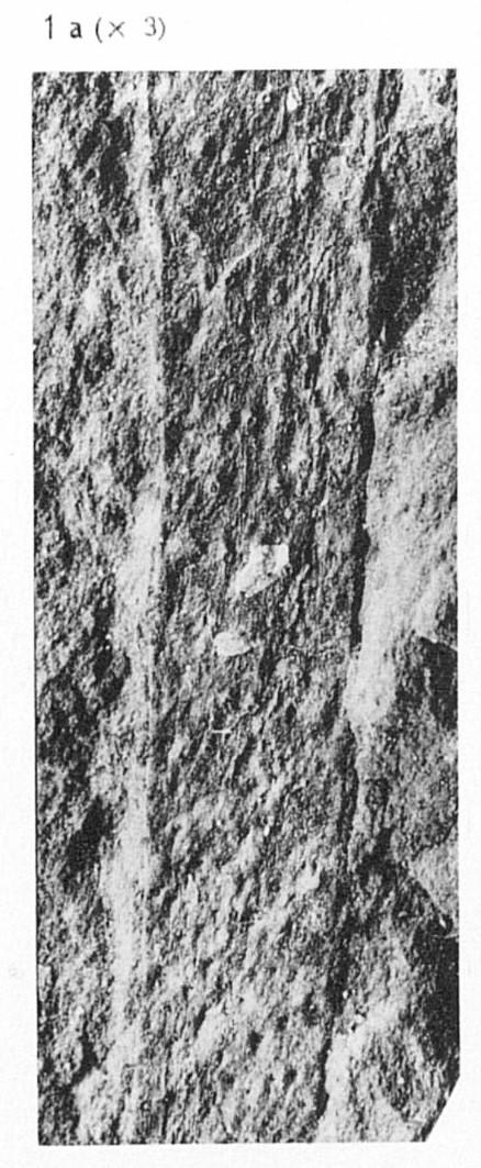 Fig 1a. - Portion du même axe, agrandie 3 fois