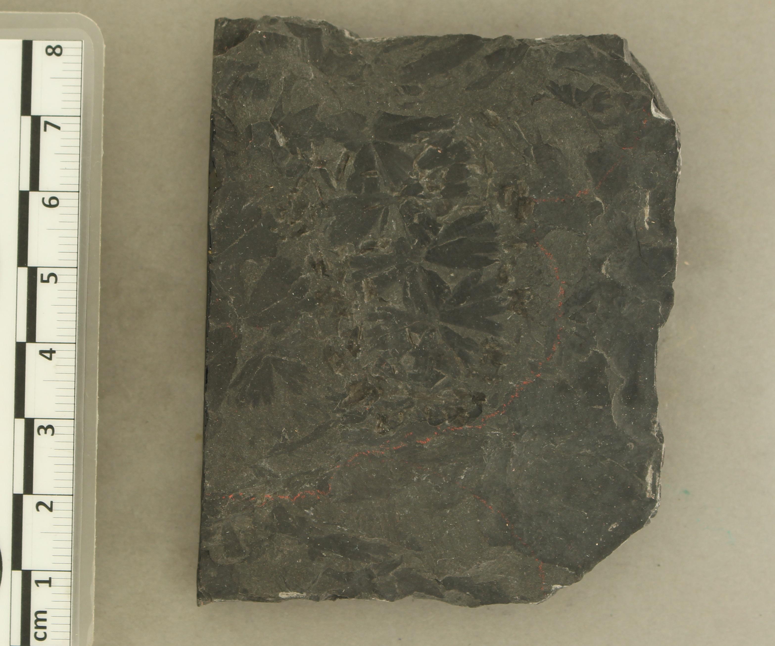 IRSNB b 8577 - Detail