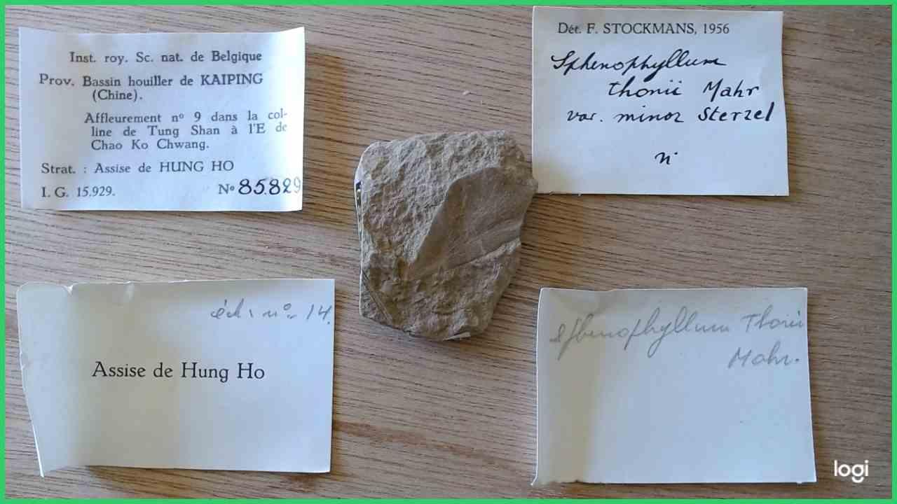 IRSNB b 8661 - Specimen & labels