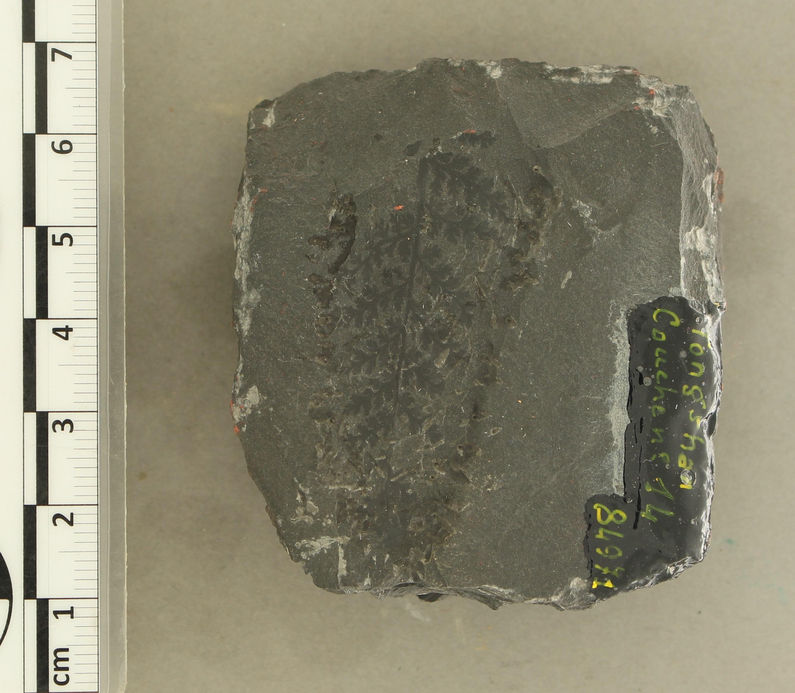 IRSNB b 8586 - Detail