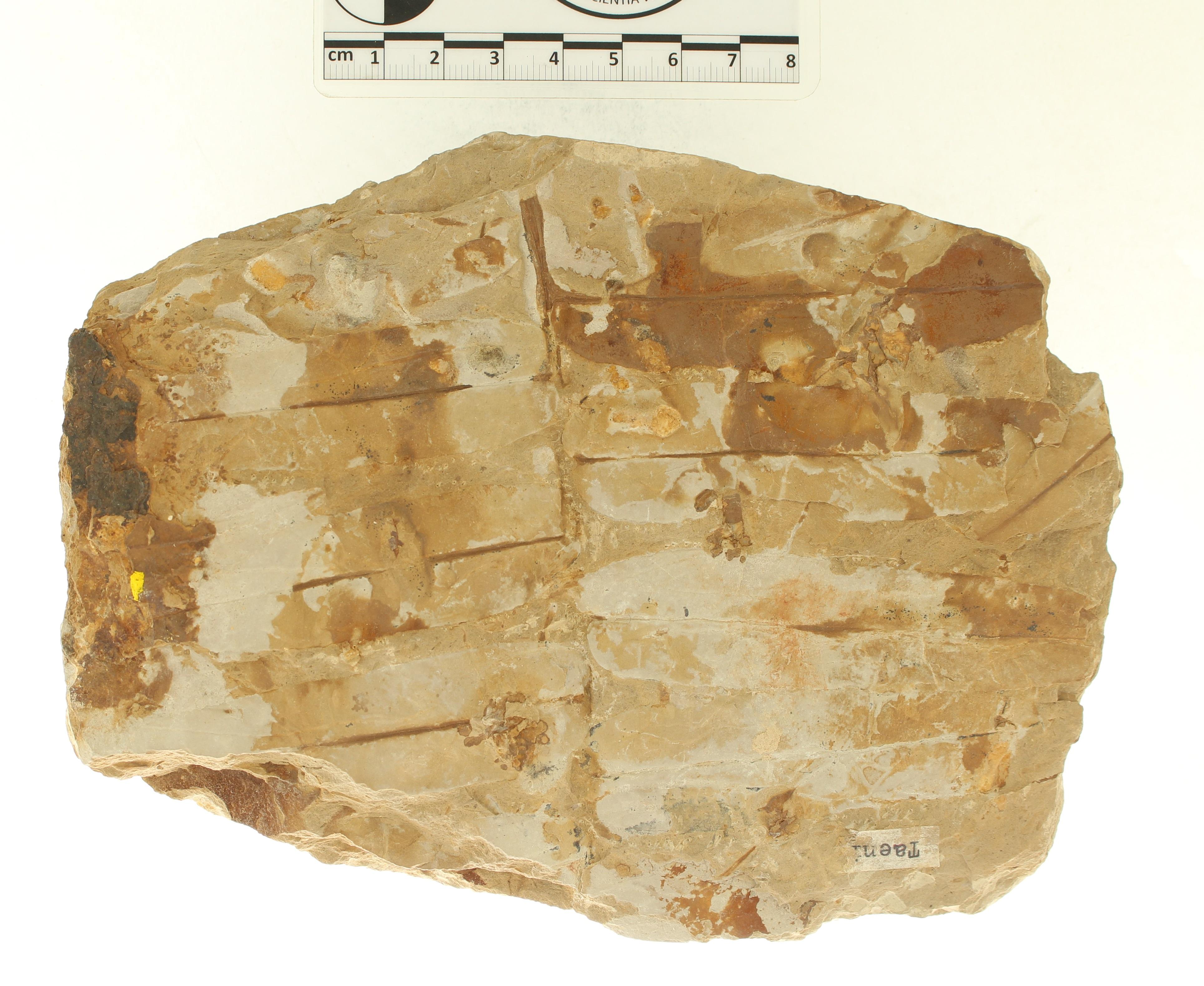 IRSNB b 8656 - Detail