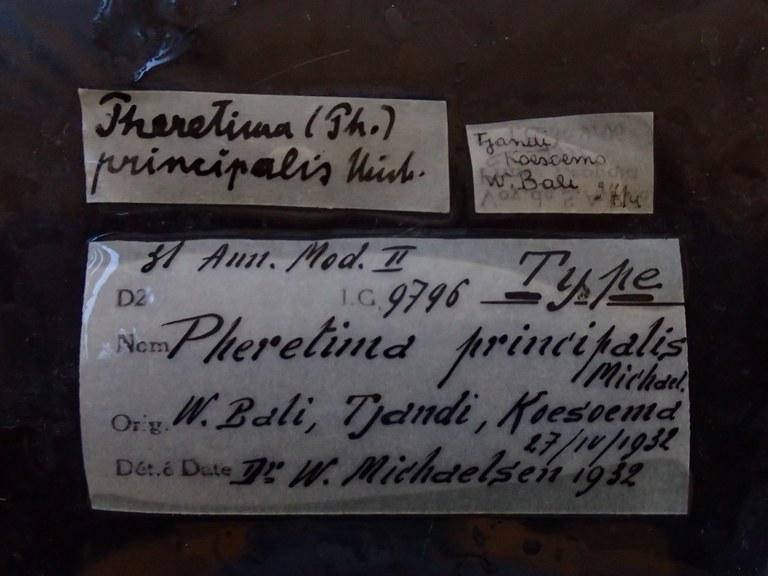 BE-RBINS-INV HOLOTYPE Pheretima principalis LABELS.jpg