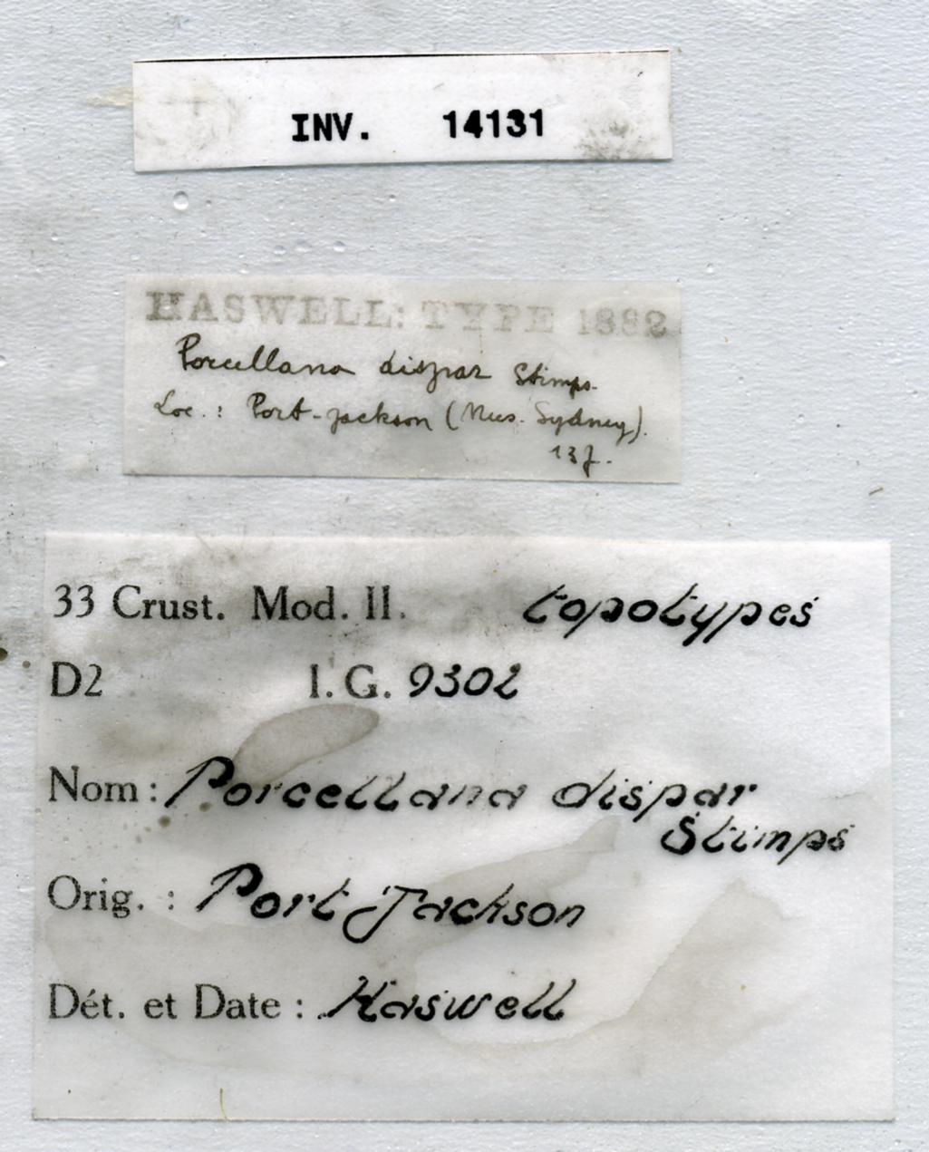 Pisidia dispar (Stimpson, 1858) INV.14131 - label.