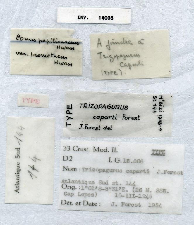 BE-RBINS-INV HOLOTYPE MALE INV.14008 Trizopagurus caparti labels.jpg