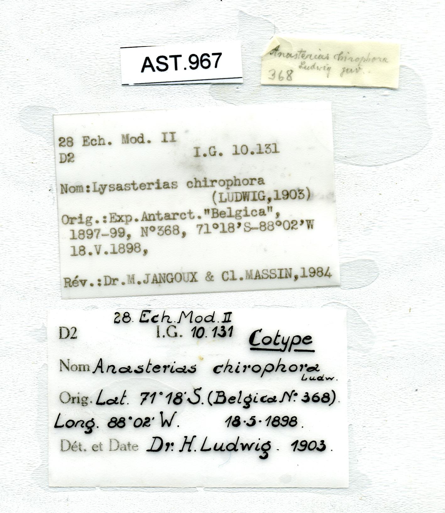 BE-RBINS-INV SYNTYPE AST.967 Anasterias chiridophora LABELS.jpg
