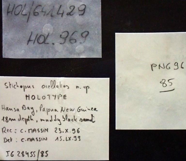 BE-RBINS-INV HOLOTYPE HOL.969 Stichopus ocellatus labels.jpg