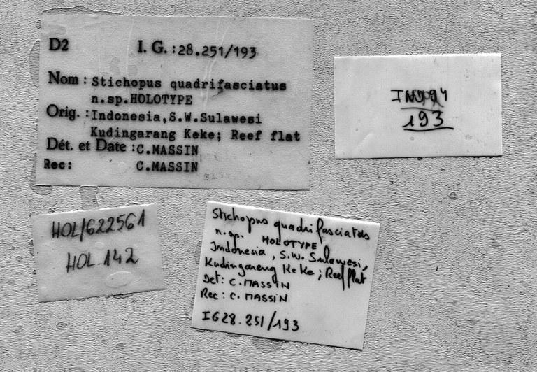 BE-RBINS-INV HOLOTYPE HOL.142 Stichopus quadrifasciatus LABELS.jpg