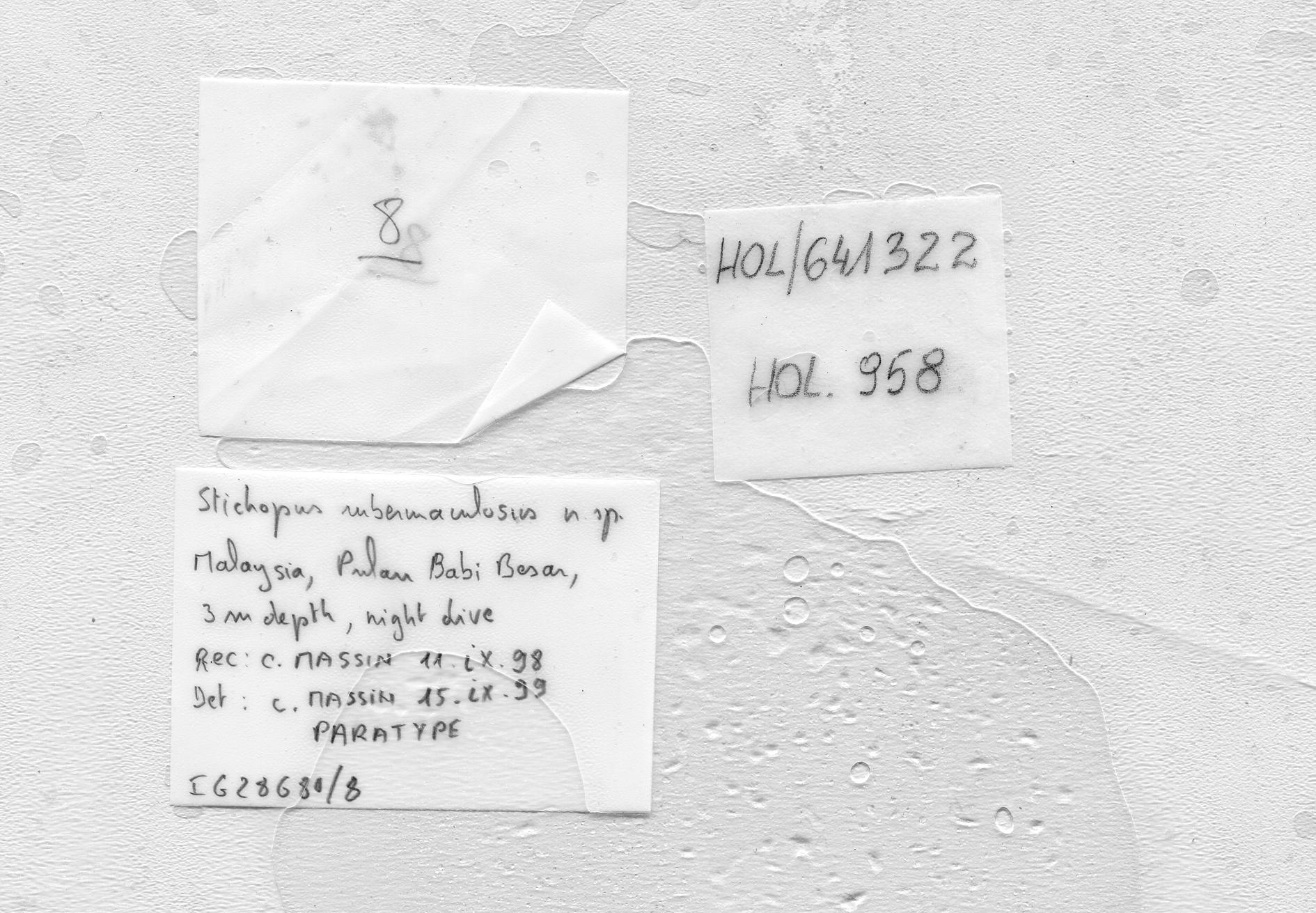 BE-RBINS-INV PARATYPE HOL.958 Stichopus rubermaculosus LABELS.jpg