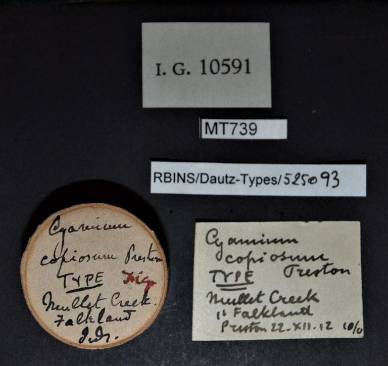 BE-RBINS-INV TYPE MT 739 Cyamium copiosum LABELS.jpg