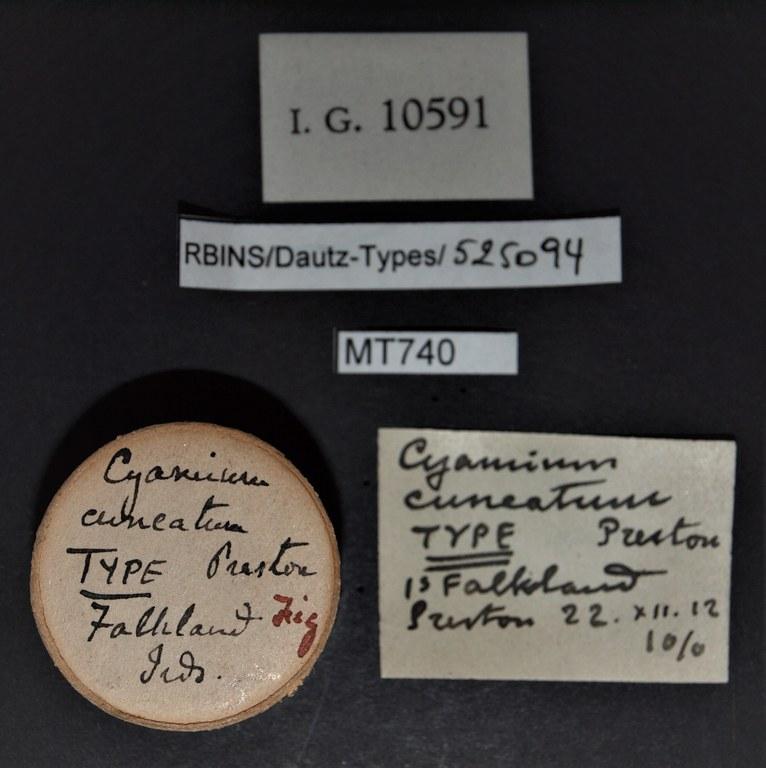 BE-RBINS-INV TYPE MT 740 Cyamium cuneatum LABELS.jpg