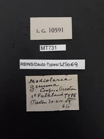 BE-RBINS-INV TYPE MT 731 Modiolarca gemma LABELS.jpg