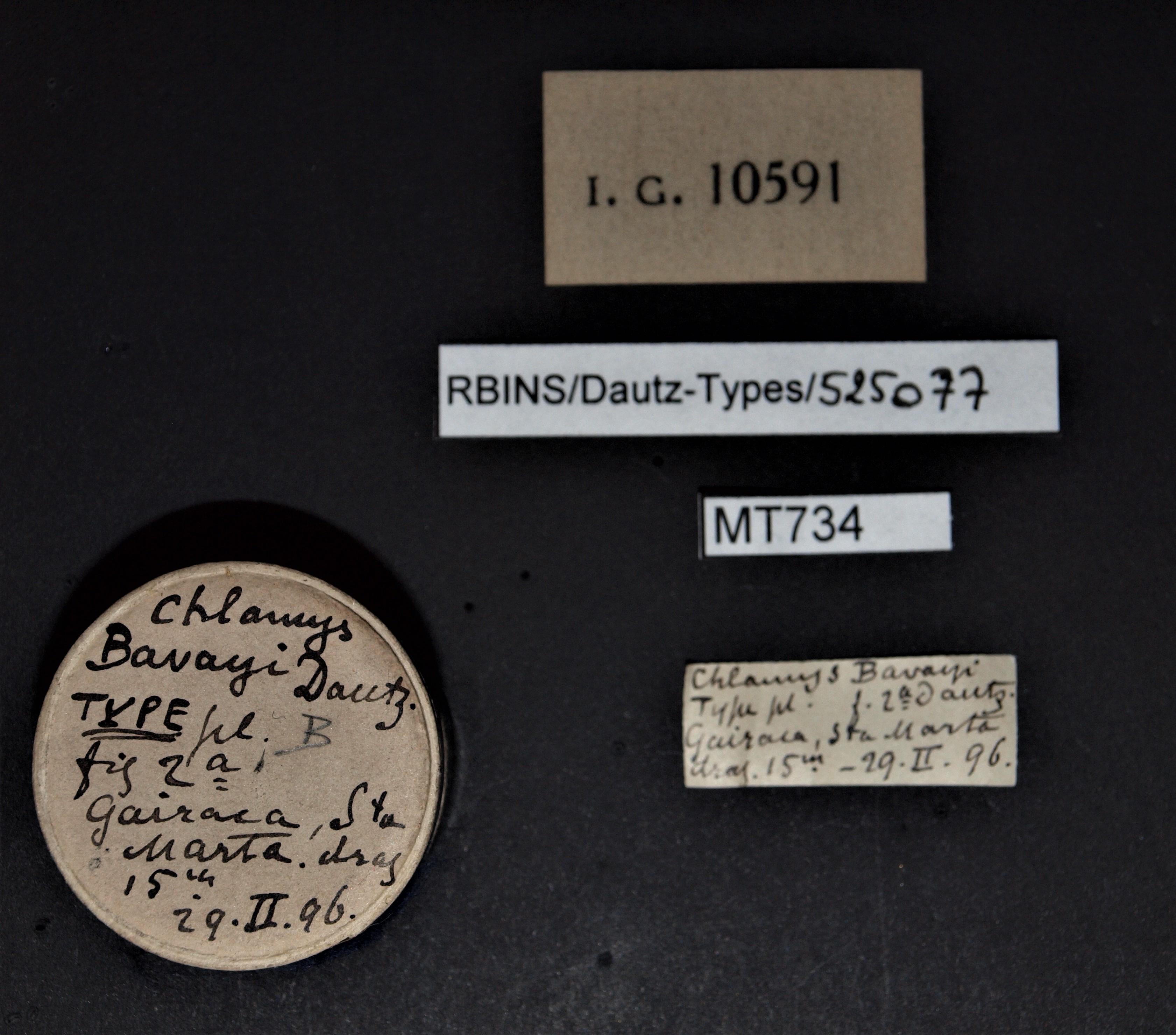 BE-RBINS-INV MT 734 Chlamys (Aequipecten) bavayi t Lb.jpg