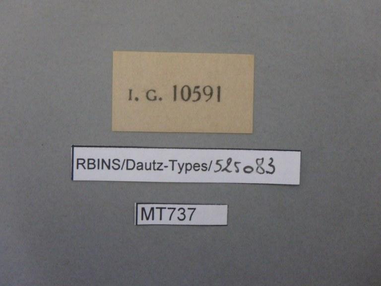 BE-RBINS-INV TYPE MT 737 Pecten opercularis var. vescoi LABELS.jpg