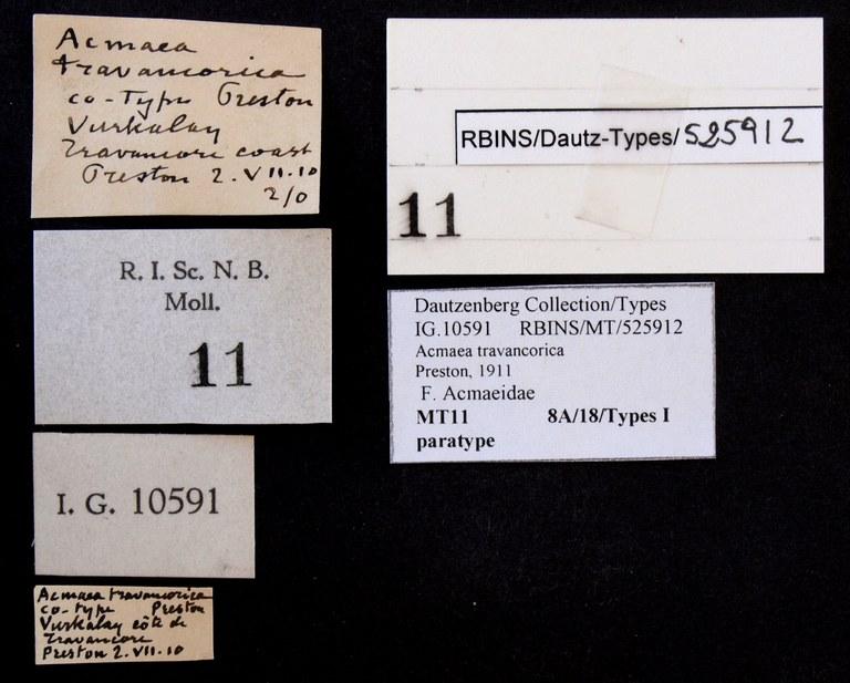 BE-RBINS-INV PARATYPE MT 11 Acmaea travancorica LABELS.jpg