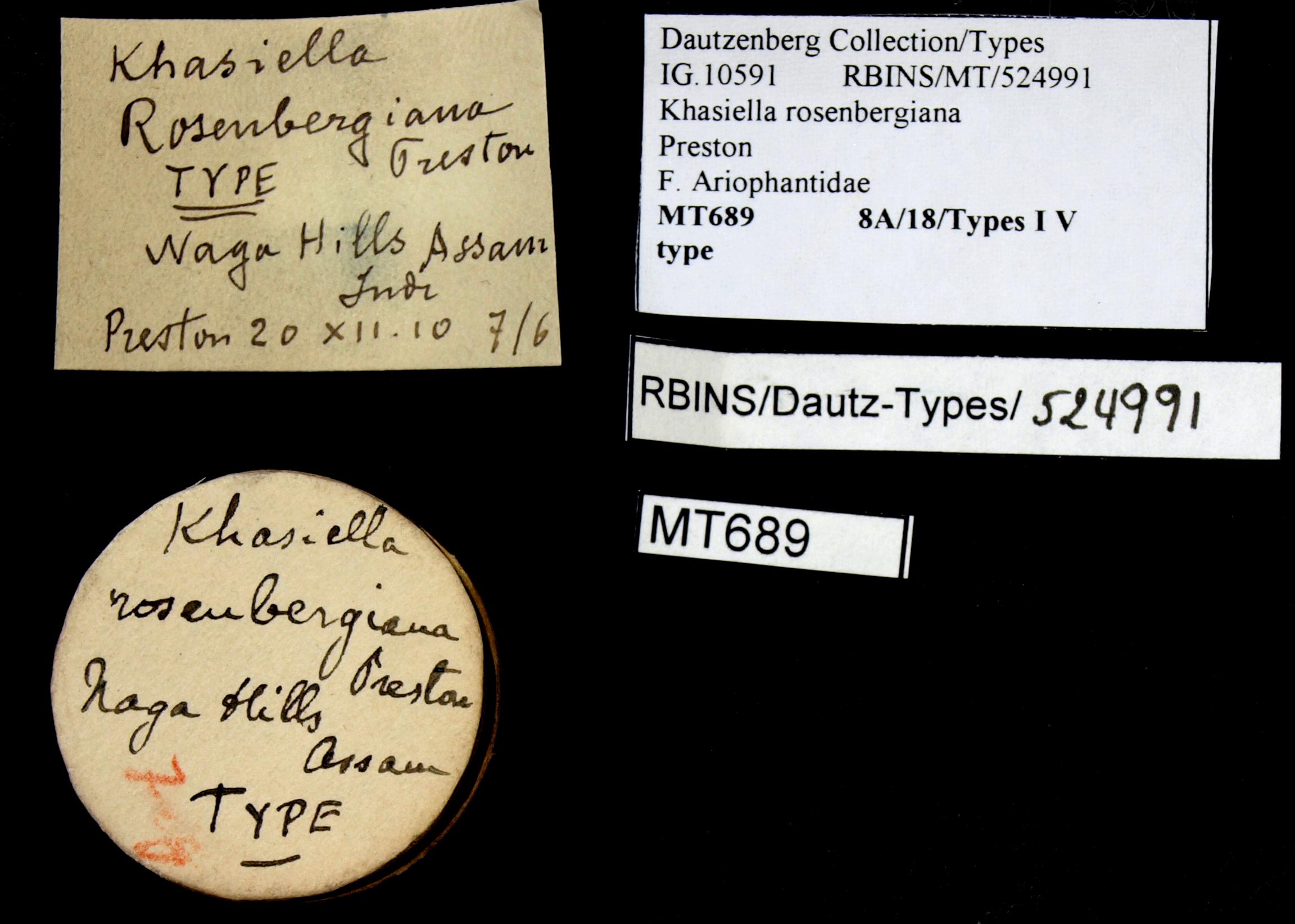 BE-RBINS-INV TYPE MT 689 Khasiella rosenbergiana LABELS.jpg
