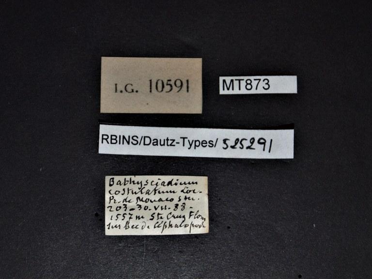 BE-RBINS-INV PARATYPE MT 873 Bathysciadium conicum LABELS.jpg
