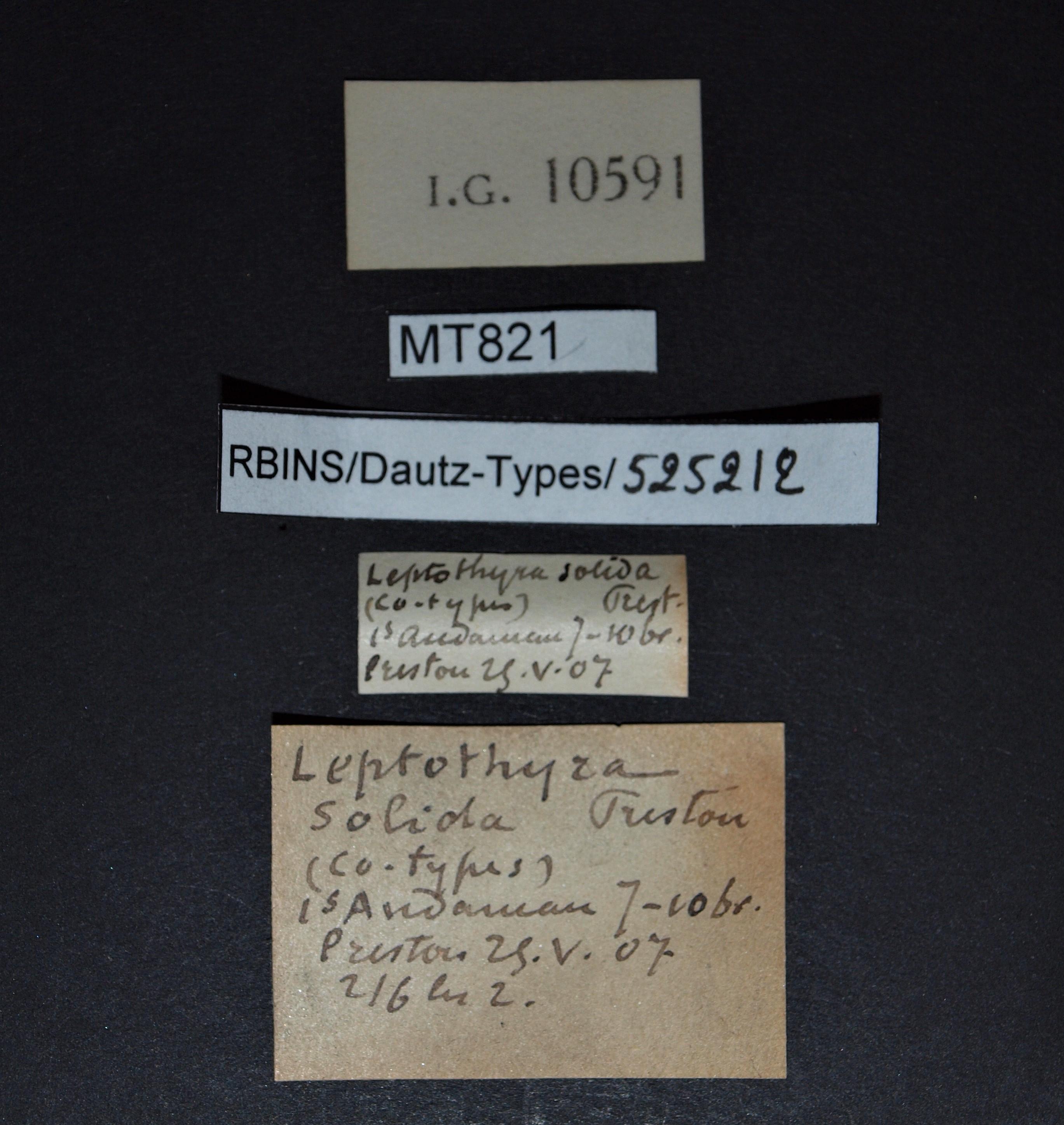 BE-RBINS-INV MT 821 Leptopoma solida pt Lb.jpg
