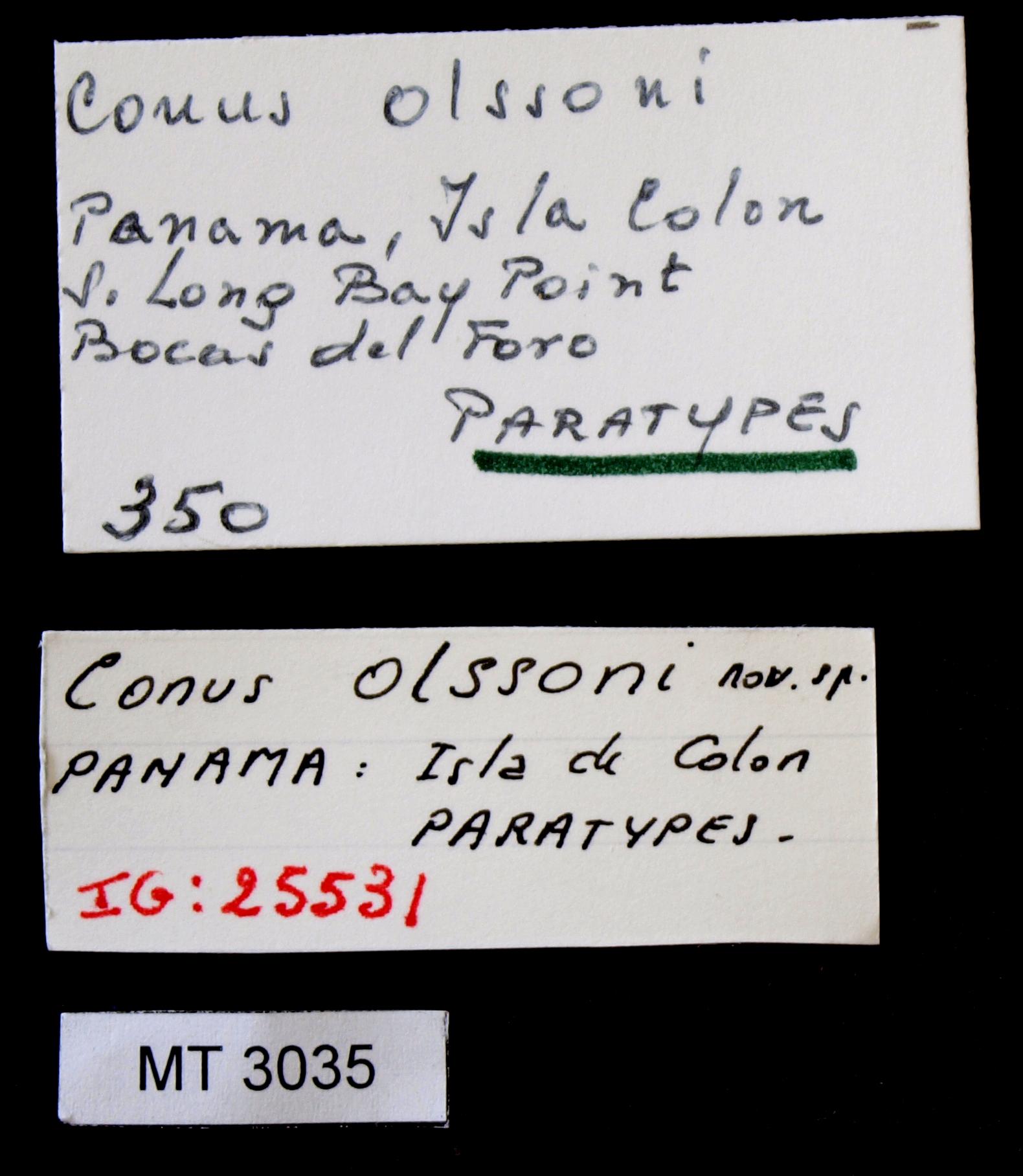 BE-RBINS-INV MT.3035 Conus (Atlanticonus) olssoni Pt Lb.JPG