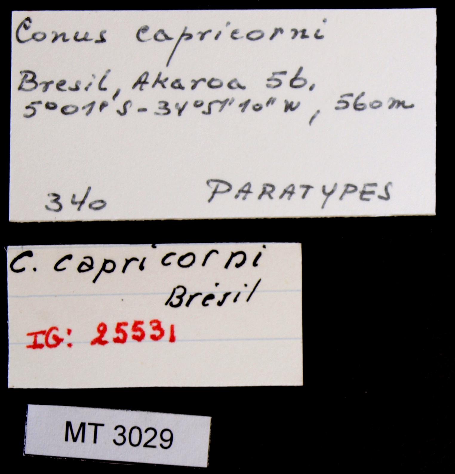 BE-RBINS-INV MT.3029 Conus capricorni Pt Lb.JPG