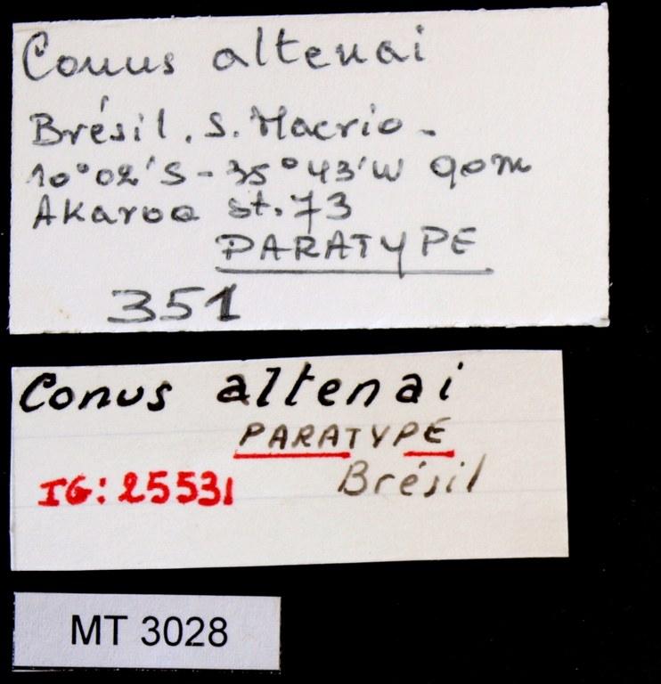 BE-RBINS-INV PARATYPE MT 3028 Conus (Chelyconus) altenai LABELS.jpg