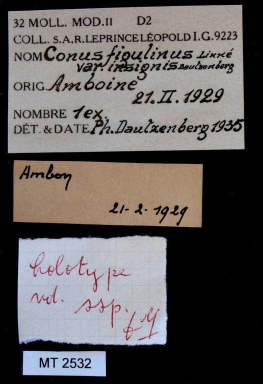 BE-RBINS-INV HOLOTYPE MT.2532 Conus figulinus var. insignis LABELS.jpg
