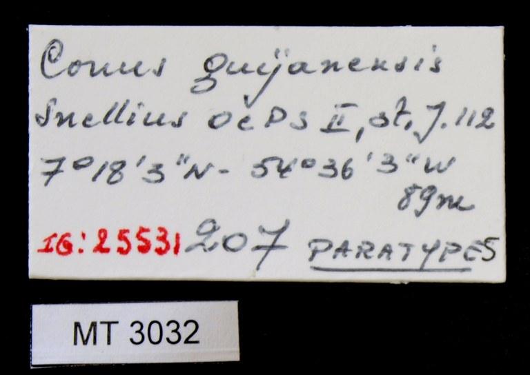 BE-RBINS-INV PARATYPE MT.3032 Conus guyanensis LABELS.jpg
