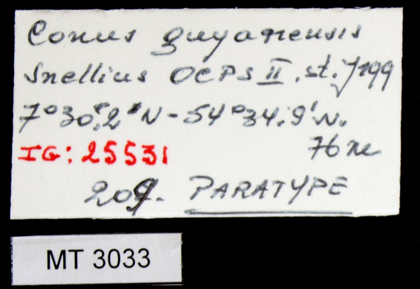 BE-RBINS-INV MT.3033 Conus guyanensis Pt Lb.JPG