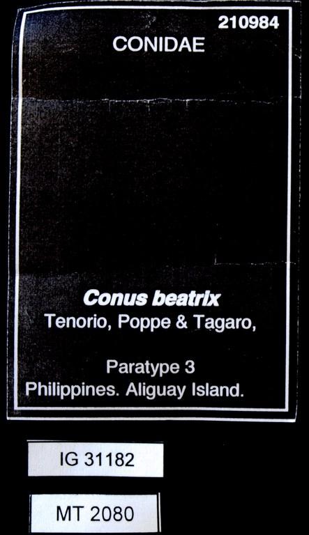 BE-RBINS-INV PARATYPE MT 2080 Conus (Turriconus) beatrix LABELS.jpg
