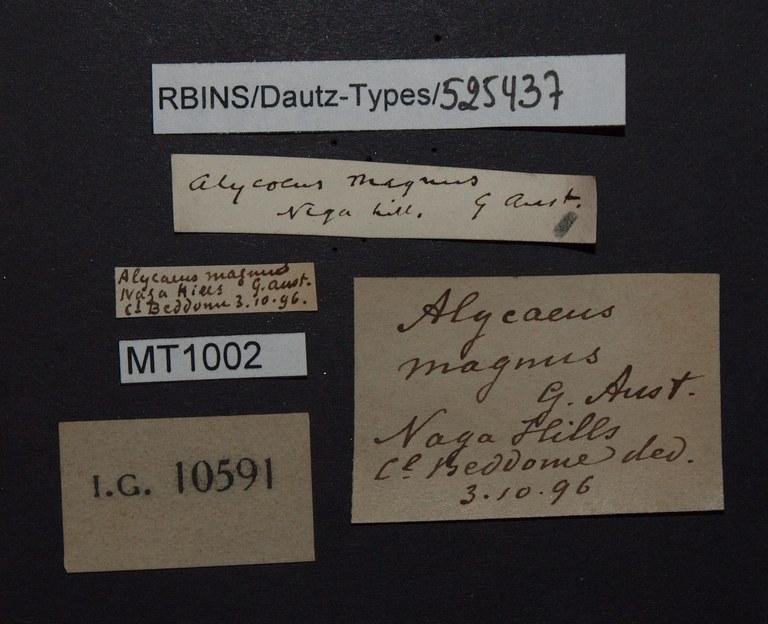 BE-RBINS-INV PARATYPE MT 1002 Alycaeus (Alycaeus) magnus LABELS.jpg