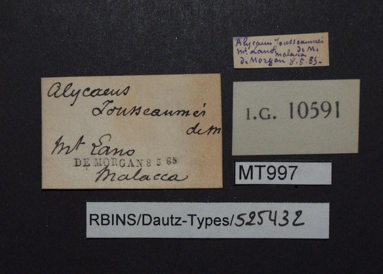 BE-RBINS-INV PARATYPE MT 997 Alycaeus (Chamalyceus) jousseaumei LABELS.jpg