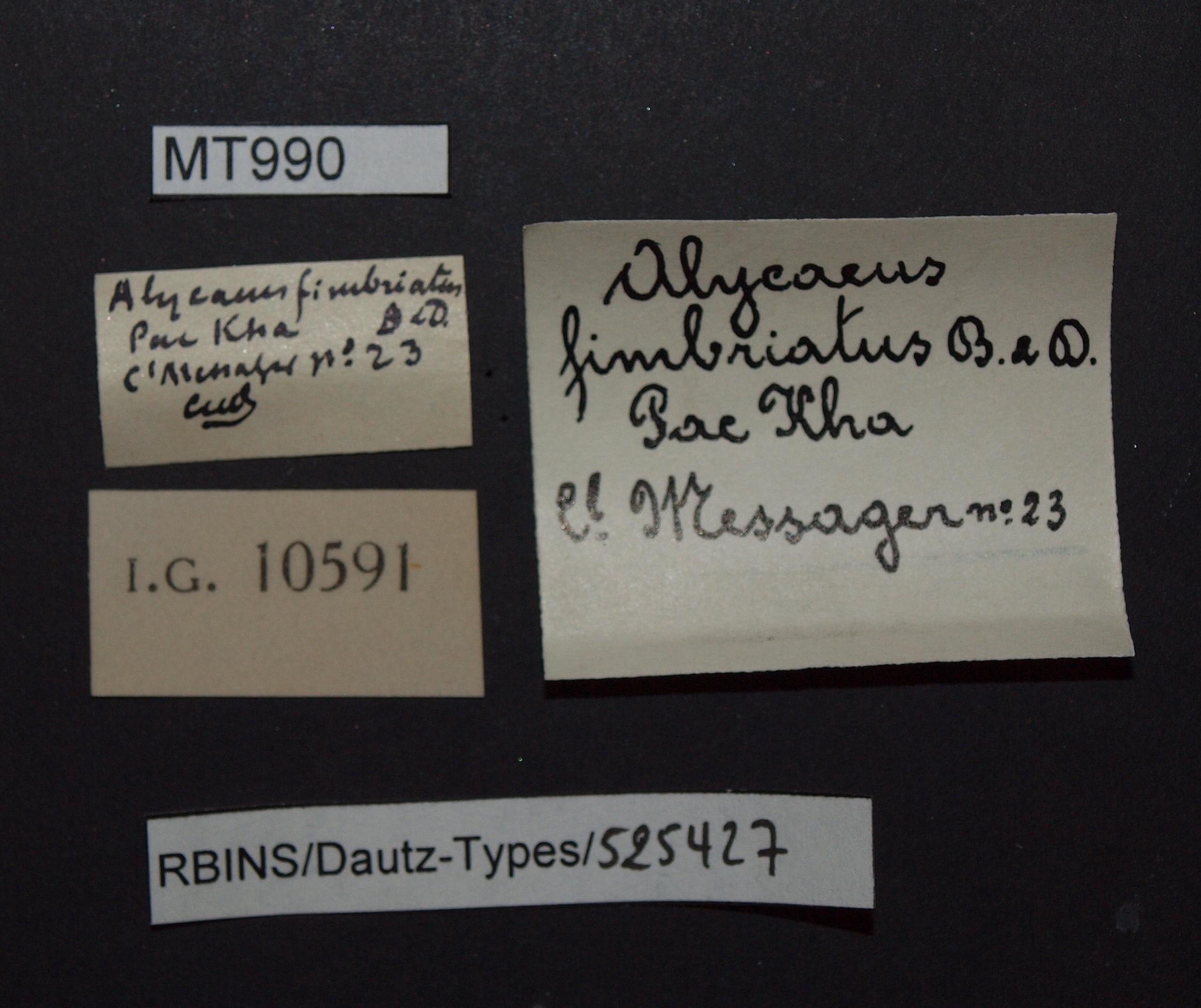 BE-RBINS-INV MT 990 Alycaeus (Charax) fimbriatus pt Lb.JPG