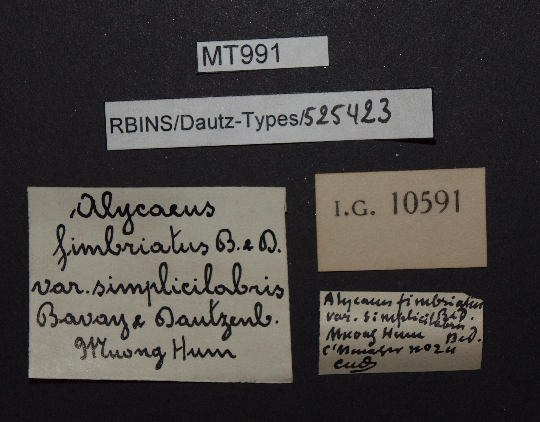 BE-RBINS-INV MT 991 Alycaeus (Charax) fimbriatus var. simplicilabris pt Lb.JPG