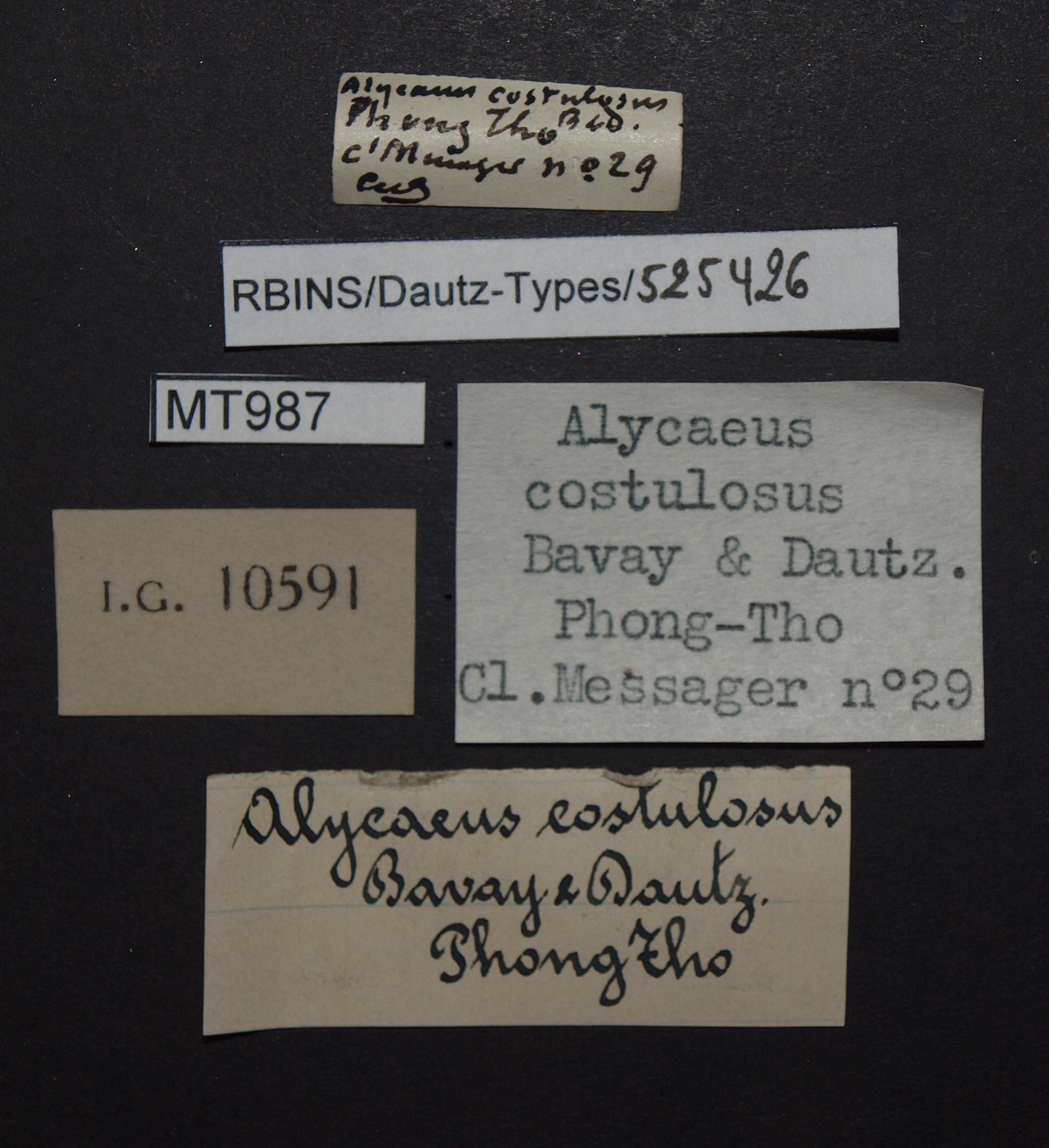 BE-RBINS-INV MT 987 Alycaeus costulosus pt Lb.JPG