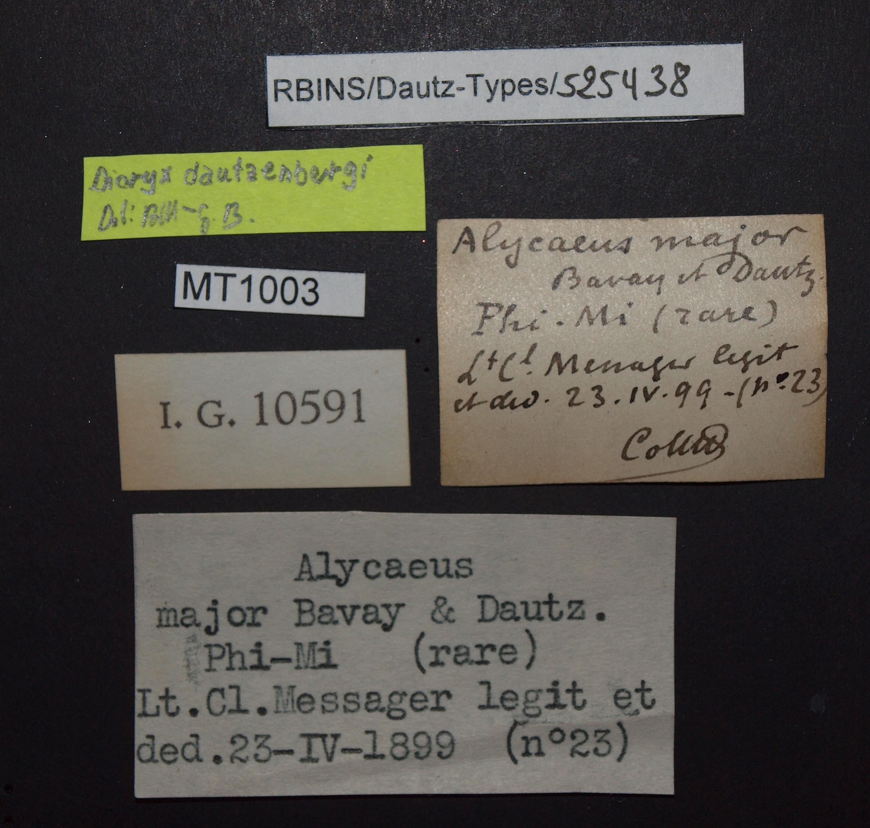 BE-RBINS-INV MT 1003 Alycaeus (Dioryx) major pt Lb.JPG