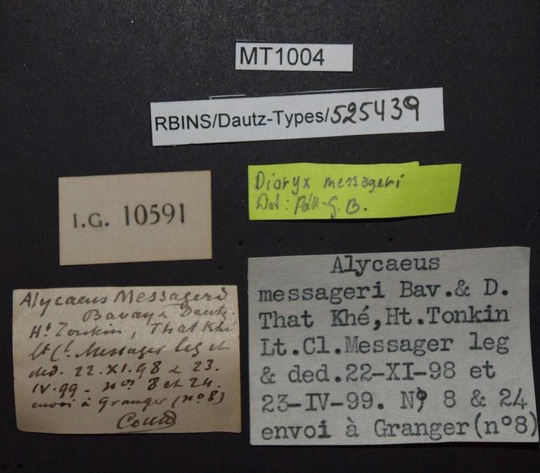 BE-RBINS-INV PARATYPE MT 1004 Alycaeus (Dioryx) messageri LABELS.jpg