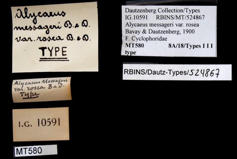 BE-RBINS-INV TYPE MT 580 Alyceaus (Dioryx) messageri var. rosea LABELS.jpg