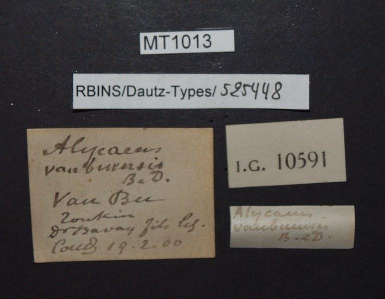 BE-RBINS-INV PARATYPE MT 1013 Alycaeus (Dioryx) vanbuensis LABELS.jpg