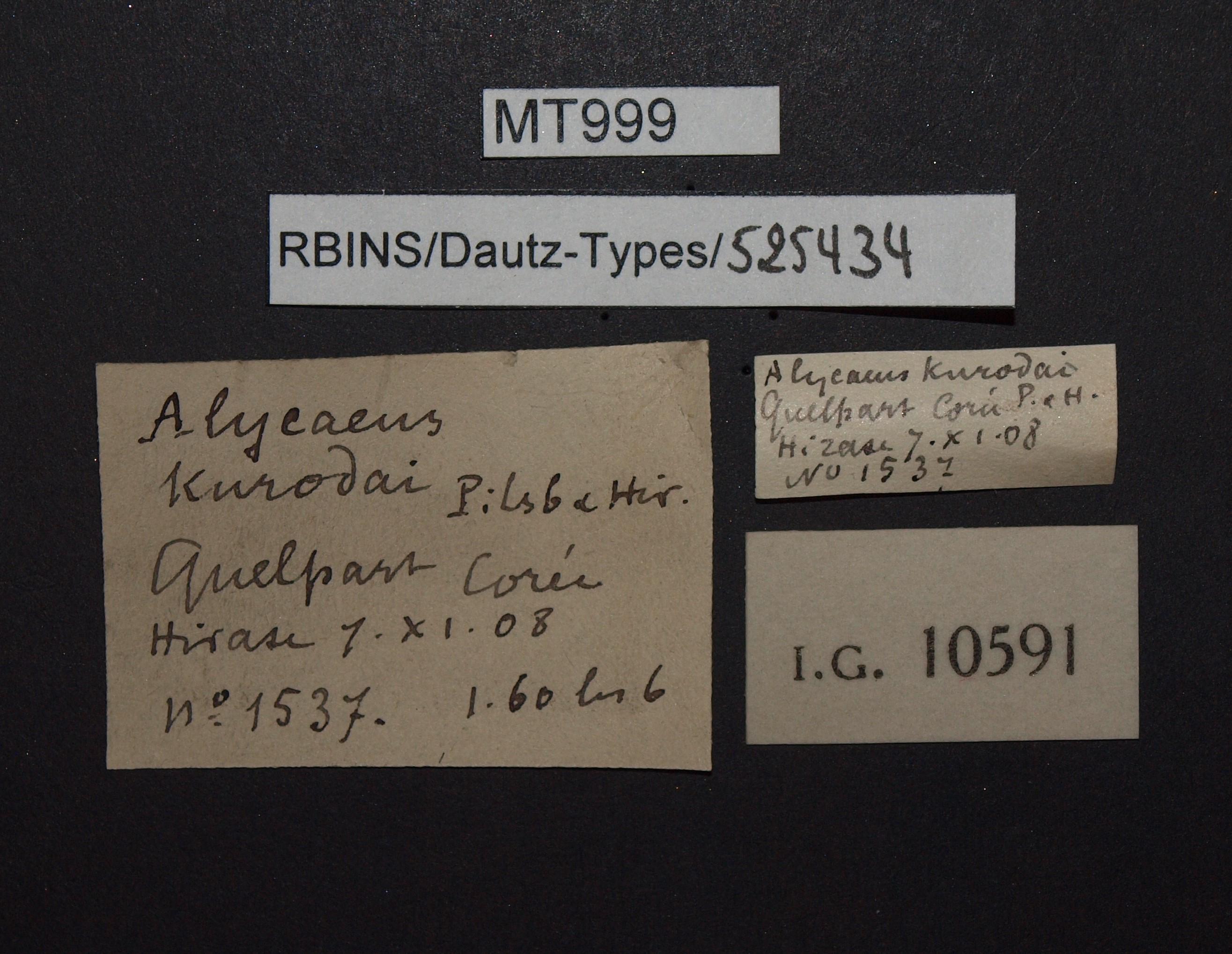 BE-RBINS-INV PARATYPE MT 999 Alycaeus kurodai LABELS.jpg