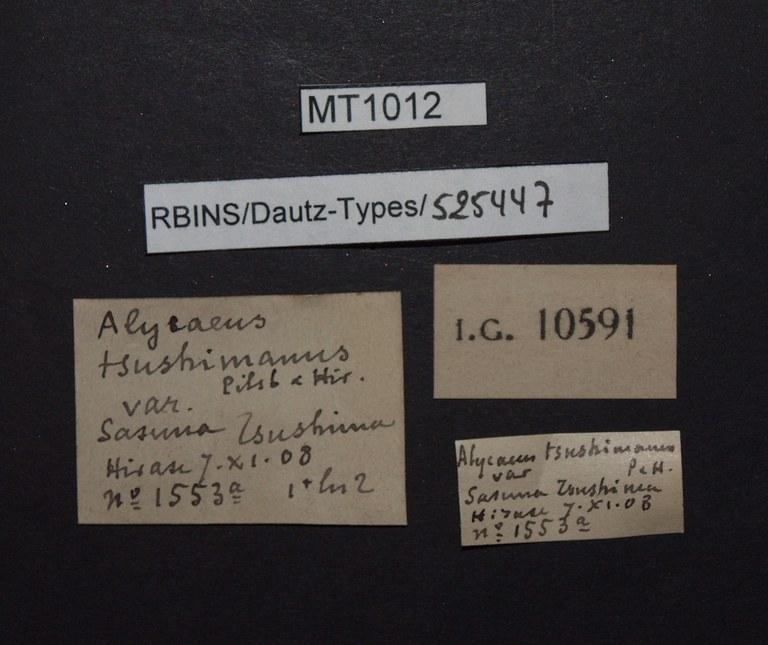 BE-RBINS-INV PARATYPE MT 1012 Alycaeus (Metalycaeus) tsushimanus LABELS.jpg
