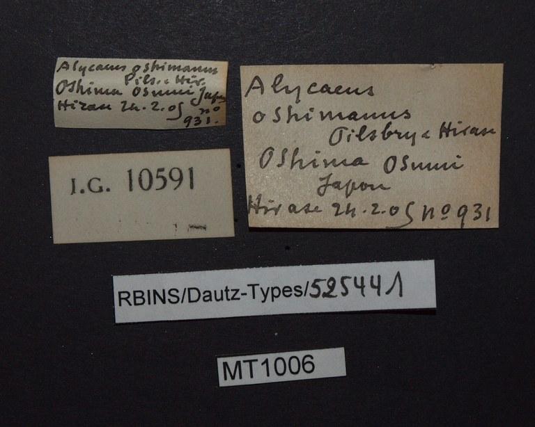 BE-RBINS-INV PARATYPE MT 1006 Alycaeus oshimanus LABELS.jpg