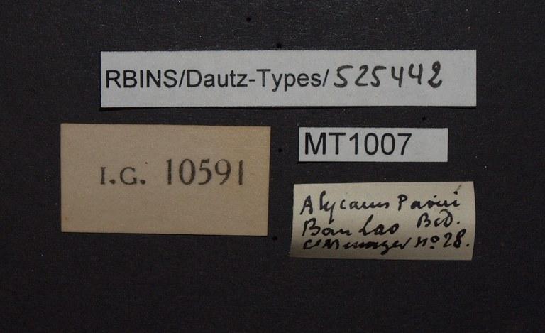 BE-RBINS-INV PARATYPE MT 1007 Alycaeus paviei LABELS.jpg