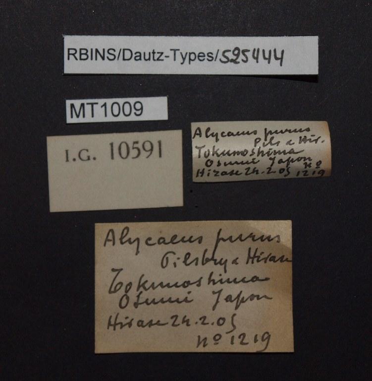 BE-RBINS-INV PARATYPE MT 1009 Alycaeus purus LABELS.jpg