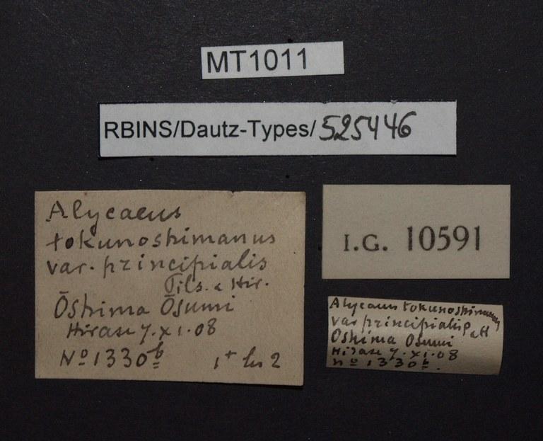 BE-RBINS-INV PARATYPE MT 1011 Alycaeus tokunoshimanus var. principalis LABELS.jpg