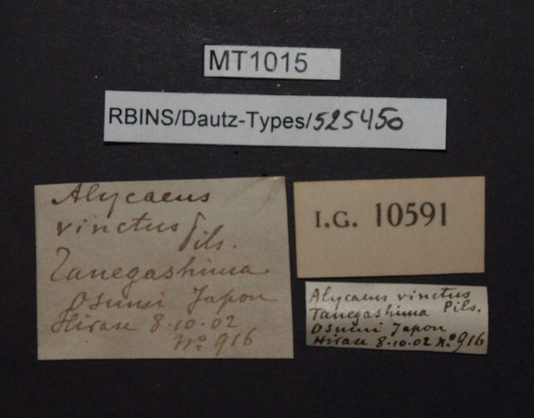 BE-RBINS-INV PARATYPE MT 1015 Alycaeus vinctus LABELS.jpg